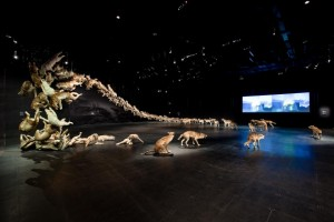 """""""Head On"""" Wolf Exhibit by Cai Guo-Qiang"""